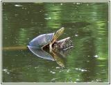 June 26 - Turtle Soup