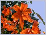 June 28 - Orange