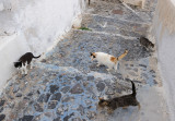 Santorini. All the Oia cats