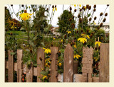 Fence7022.jpg