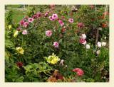 Flowers7031.jpg
