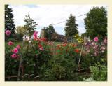 GardenFlowers7034.jpg