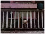 DoggonePorch7768.jpg