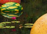 The Victoria Amazonica Pool