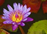 fauna_and_flora