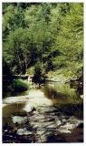 by a still creek