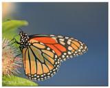 Butterfly July 20