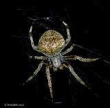 Spider September 11