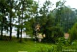 Spider's Web September 17