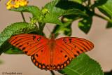 Butterfly September 20