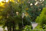 Spider's Web September 24