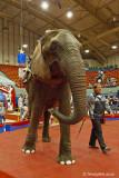 Circus Elephant September 27