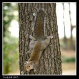 Screwy Squirrel January 21 *