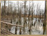 February 25 BeaverVille *