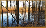 Flooded Trees March 8 *