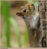 Squirrel March 31 *