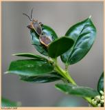 Love Bugs April 2 *