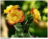 Roses April 18 *
