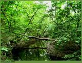 Green April 29 *