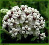 Wild Flower May 5 *