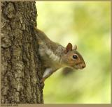 Squirrel May 14 *