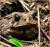 Toad July 7 *