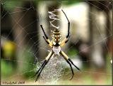Spider July 8 *