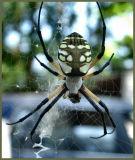 Spider July 16 *