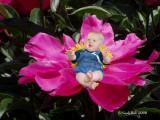 Flower Child February 24 *