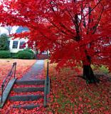 Fall and Winter in Montclair......Casas y Cosas de Montclair