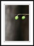 2 fruits.jpg