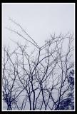 Lonely tree 2.jpg