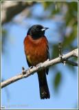 Oiseaux Ontario