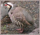 Oiseaux exotiques / Exotics birds