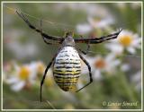 Araignées / Spiders