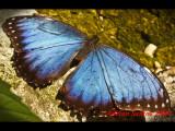 Butterfly Rainforest 09