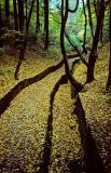 Odenwald Path