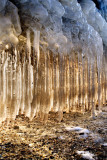backlit icicles