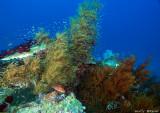 reef4.jpg