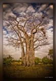africa54.jpg