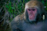 Une visite au Zoo sauvage de St-Félicien