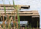 Centre d'Interprétation de la Nature du Lac Boivin