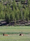 West Yellowstone - Madison Junction