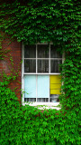 Window with English Ivy.jpg
