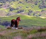 Highland Horses.jpg