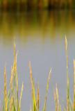 Pawleys Island Marsh 2.jpg