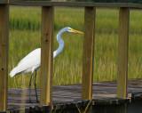 Pawleys Island Marsh 4.jpg