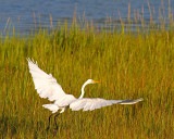 Pawleys Island Marsh 5.jpg