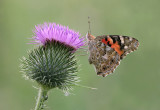 Butterflies & moths - Vlinders en motten