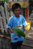 A little kid with a Parrot...